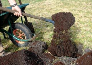 Plantacion en plena tierra - Comment planter un bananier ...