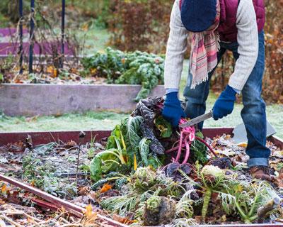 Qu hacer con el huerto en invierno for Preparar el huerto en invierno