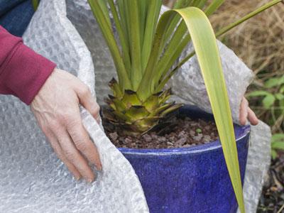 Plantas De Exterior Resistentes Al Frio Y Calor Excellent Amazing
