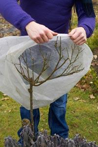 Proteger las plantas del fr o - Plantas de exterior resistentes al frio y al calor fotos ...