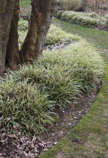 Tener bonitos bordillos en el jard n - Bordillos para jardines ...