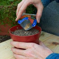 Como sembrar en una maceta - Cultivar lavanda en casa ...
