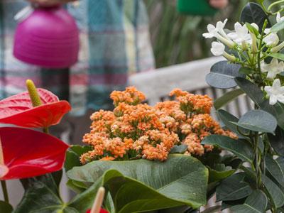 Cuidar las plantas de interior en invierno for Cuidar hierbabuena en interior