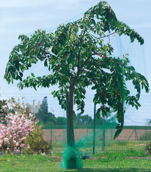 red anti aves para arboles frutales 8x10 m venta red anti aves para arboles frutales 8x10 m. Black Bedroom Furniture Sets. Home Design Ideas