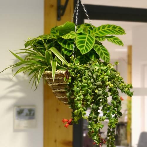 Jardinera de interior 39 indoor jungle 39 venta jardinera de - Jardineras de interior ...