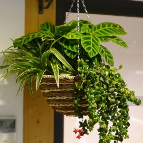 Jardinera De Interior Indoor Jungle Venta Jardinera De Interior - Jardinera-interior