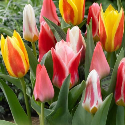M01 estribo imagen perchas transferencia marítimo anclajes de flores din a4 o a5 sustancias brillantes