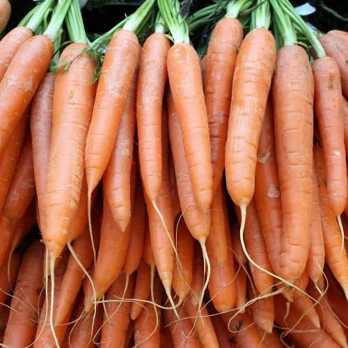 Zanahoria De Nantes Tip Top Venta Zanahoria De Nantes Tip Top La siguiente tabla muestra una lista de la cantidad de los principales nutrientes de la zanahoria zanahoria de nantes tip top venta