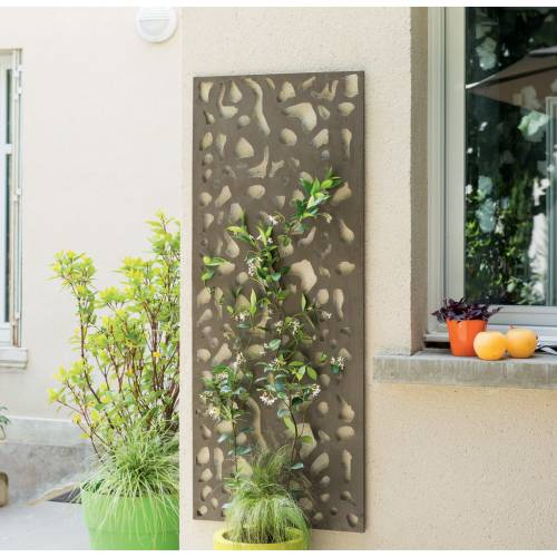 Celosia Decorativa Interior Plantas