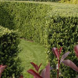 Jardines De Sombra Que Plantar A La Sombra - Plantas-exterior-sombra