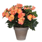 Planta Artificial - Begonia color Salmón - MICA