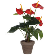Planta Artificial - Anthurium Rojo - MICA